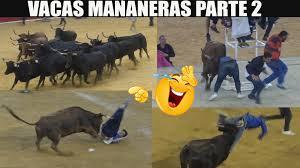 Mañanas vaquilleras parte 2 momentos divertidos con las vacas saltarinas fiestas taurinas Zaragoza
