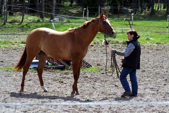 Att dansa med hästar.....Westernclinic med Per Larsson.... (5/6)