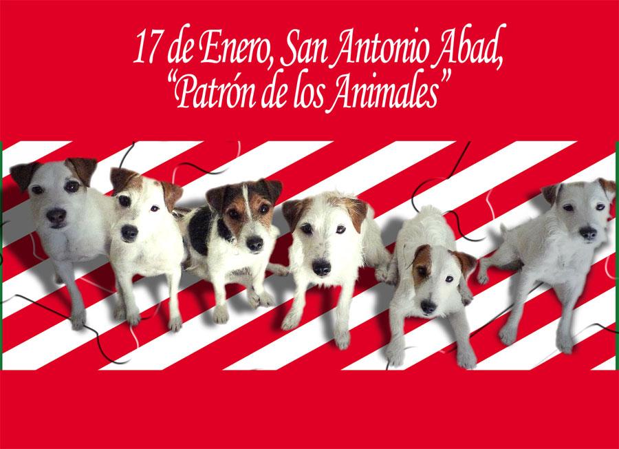 17 de enero, San Antón, patrón de los animales