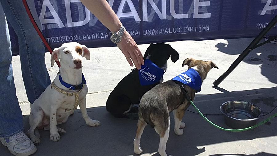 Cachorras en adopción de Avanza Torrelodones