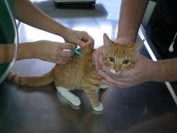Campaña de vacunación antirábica canina y felina en Torrelodones