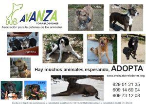 Perros y gatos de Avanza Torrelodones para adopción abril 2012 (click para ampliar)