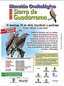 IX Maratón Ornitológico 2012 Sierra Guadarrama