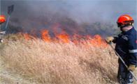 Incendio forestal en el Area Homogénea Norte de Torrelodones
