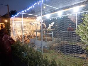 3er Premio Concurso de Carrozas de la Cabalgata de Reyes de Hoyo de Manzanares 2013
