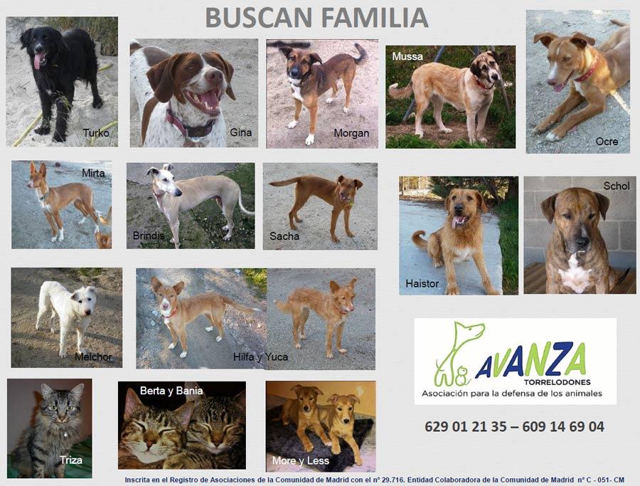 Perros y gatos en adopción de Avanza Torrelodones - marzo de 2013