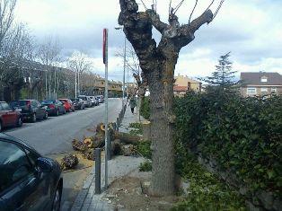 Árboles talados en Pº Ruíz Jiménez (Foto: acTÚa)