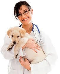 Campaña de vacunación antirrábica e identificación animal 2013