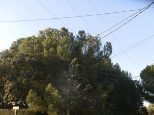 El árbol y los cables que originaron la tragedia (los tres cables paralelos más altos, son de alta tensión)