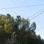 Árboles tocando cables de electricidad aéreos