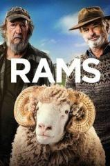 Rams Thumb