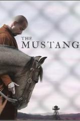 The Mustang Thumb