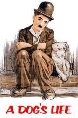 Vida de Cachorro Thumb