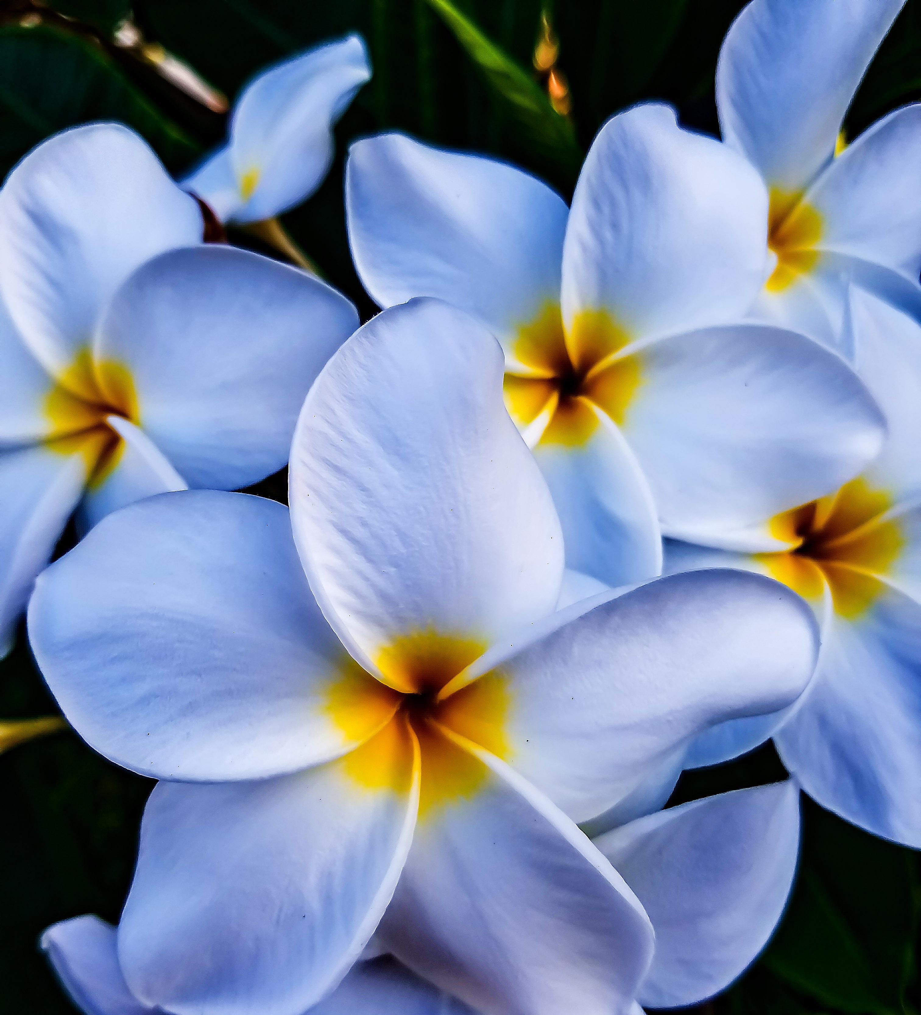 Spring Summer Flowers Torsadventures