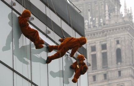 WWF activists dressed as orangutans hang on ropes down the side of a clothing store in front of the Palace of Culture in Warsaw, November 15, 2011.