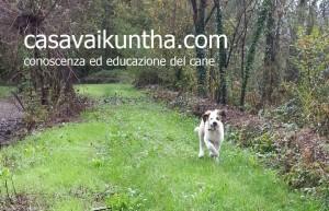 Sunday dog a Casa Vaikuntha