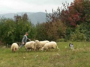 Lo sheep dog di Casa Vaikuntha