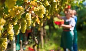 Approvata oggi la legge quadro per l'agricoltura della Regione Piemonte