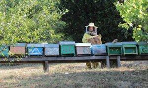 Riapre il bando regionale PSR 2014-2020, un'opportunità per i giovani agricoltori che operano in aree marginali