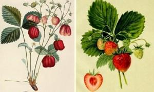 Svelato il dono che i Musei Pellizza da Volpedo faranno ai loro visitatori per la Giornata Nazionale dei Piccoli Musei