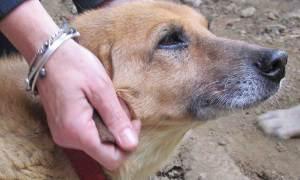 Lo sapevi che grazie al TTouch® è possibile risolvere i problemi caratteriali del tuo cane?