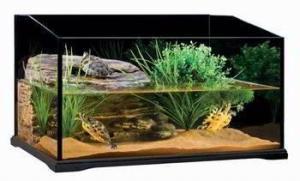 terrario-acuario-tortugas