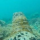 el arrecife de coral visto desde una tortuga