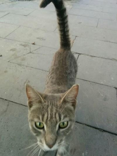 トルコ イスタンブールで茶色い猫が、こちらに興味をしめしている画像 写真