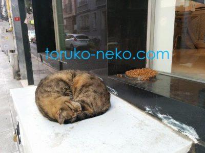 cat トルコ イスタンブール 猫歩き 茶色い猫の写真 キャットフードの画像