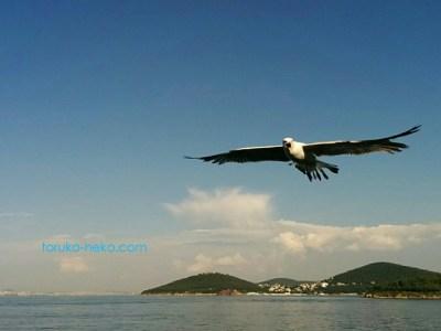 イスタンブールの島をめぐる船から カモメが両翼を広げてこちらに口を開いている 画像 写真 背景に島々が見えている