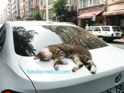 トルコの猫がイスタンブールでBMWの上でリラックスしすぎて寝ているので、死んでるみたいに見えるが、ちゃんと生きている画像 写真