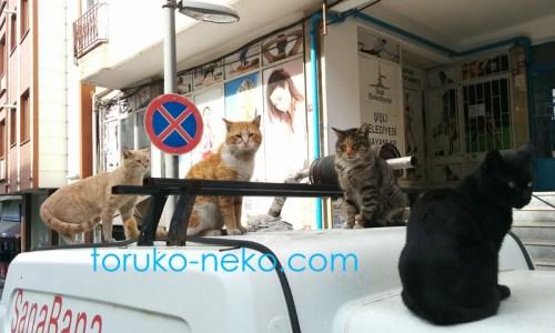 トルコ イスタンブールで 4匹の猫が、車の上に集まってこちらを見ている写真 画像 黒猫茶色い猫 三毛猫 黄土色 生姜色の猫