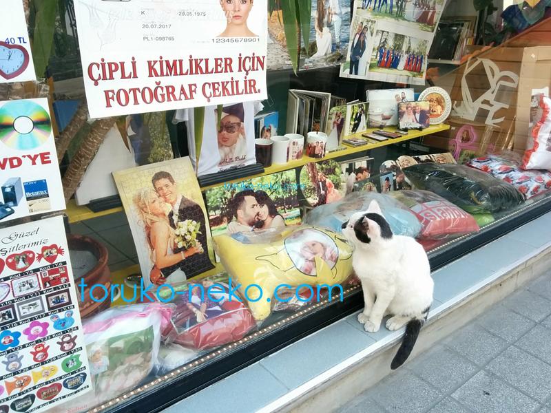 トルコ イスタンブールで 結婚式のカップルの幸せそうな写真に、かなりの時間 見入っている白黒ネコの写真 画像。
