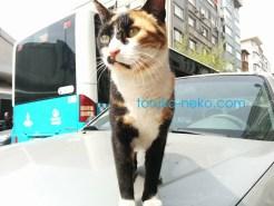 イスタンブールの野良猫の三毛猫が近づいてきてくれて 凛と立っている写真 画像