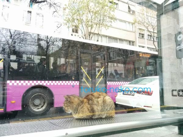 トルコ イスタンブールで雨の日に背中を丸くしてバス停でバスを待つ一匹の可愛い猫の画像 写真 数値の丸め方 JIS規格A規定