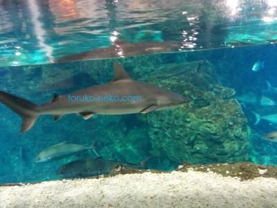 イスタンブール水族館 サメ シャーク shark トルコ猫歩き