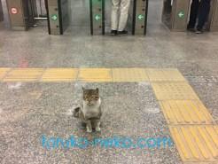 イスタンブールの地下鉄駅の改札の前で、乗客を出迎えている一匹の可愛い猫の写真 画像