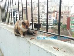 トルコ イスタンブール シシリで2匹の猫がエサを前にしてお座りしている画像 写真 背景にシシリの街並みが見えている