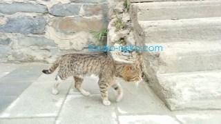 曇りの日に一匹の猫が右向きに歩いていっている様子の写真 画像