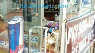イスタンブールのお店で雨のために中に入れてもらっているがお客に興味津津の猫ちゃん 招き猫 まねきねこ