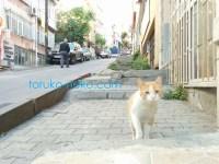 猫 坂道のきつい道で白と黄土色 イスタンブール トルコ猫歩き