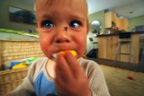 Lemon eater