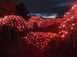 Red Butte red maze.