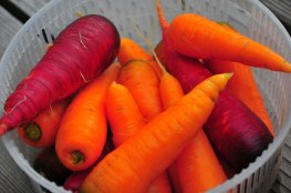 Carrots! Super saturated!