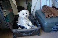 Poppie making sure she isn't left behind.