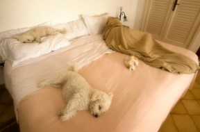 Hangover morning in Positano