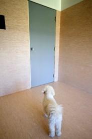 Poppie contemplates freedom