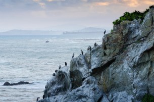 Shags on a rock with Kaikoura in the background
