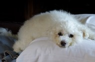 Sad August days - Daisy aged 15 years and 7 months passes away
