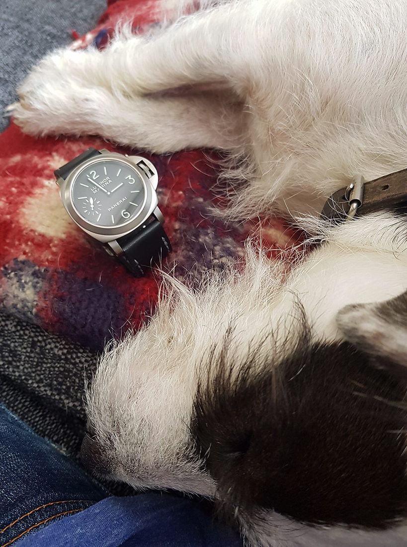 Panerai 177 on nautilus leather with grey stitching. Being guarded by the ferocious Alfie. © Glen Richardson